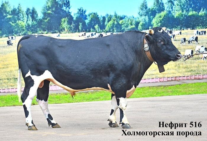 Нефрит 516 Холмогорский бык