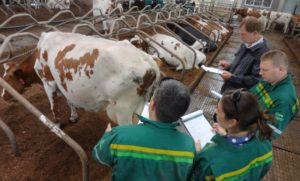 Диагностика коровы