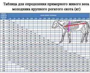 Таблица веса КРС