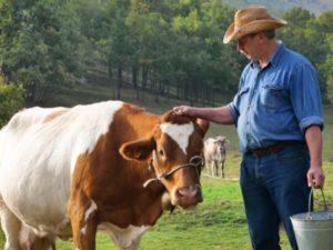 Как выявить заболевание у коровы?