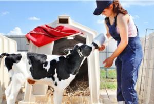 Заменители цельного молока для телят