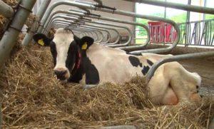 Нарушение норм содержания скота