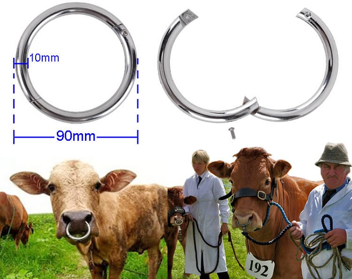 Параметры кольца для быка