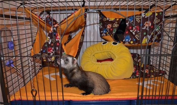 хорек и подушки