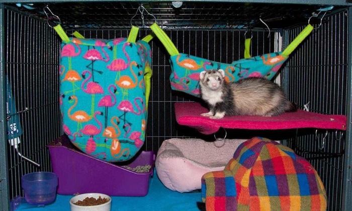 хорек и его место в клетке