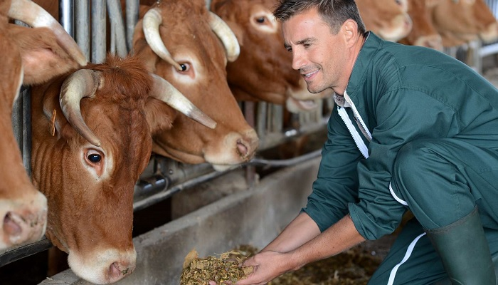 корова и корм