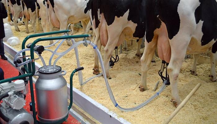 корова и аппарат