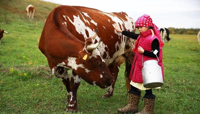 девочка и корова