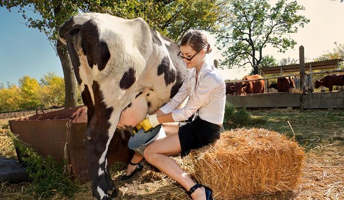 девушка и корова