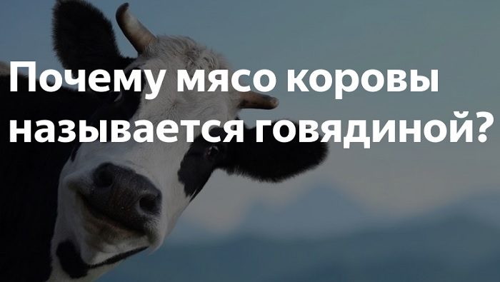 Корова выглядывает