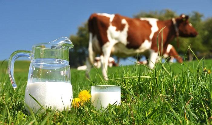 Кувшин с молоком и коровы