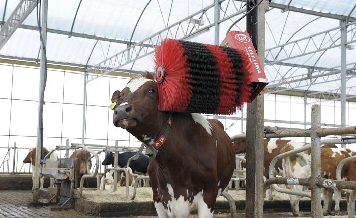 Щетка чистит корову