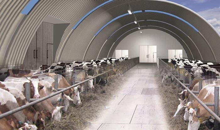 проект фермы и коровы