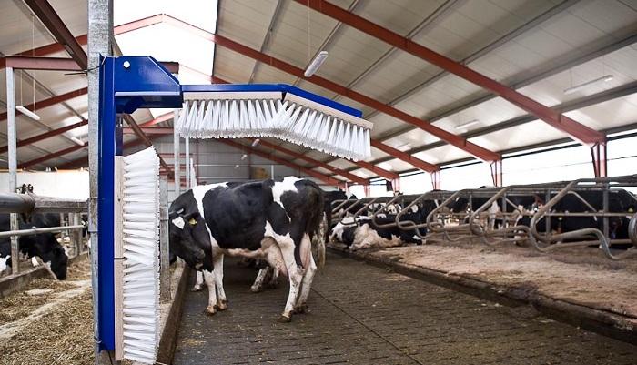 корова и щетка