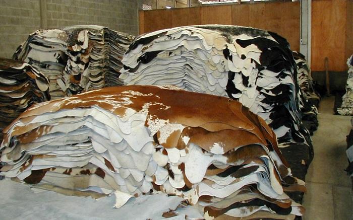 Большое количество коровьих шкур