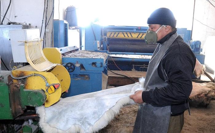 Обработка белой коровьей шкуры