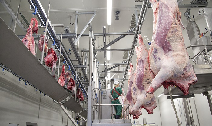 Туши коров на заводе