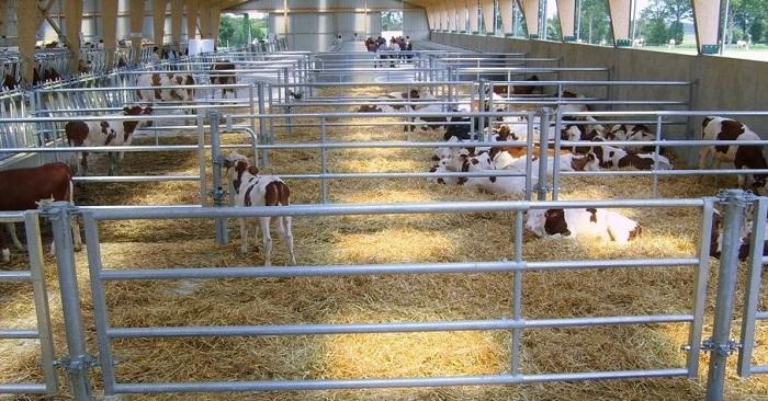 ферментационная подстилка на ферме