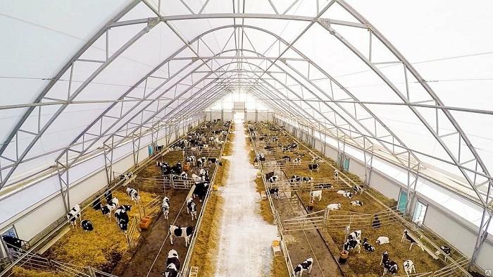 Большая ферма для КРС