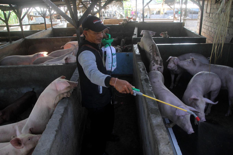Фермер обрабатывает свинарник