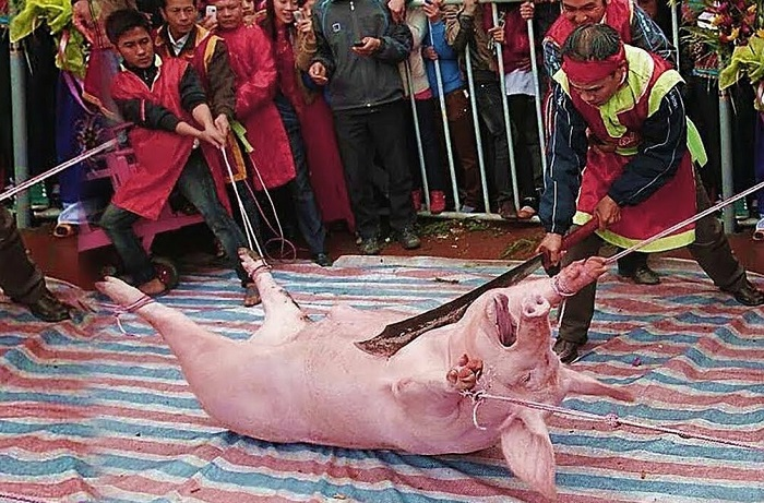 сабля и свинья