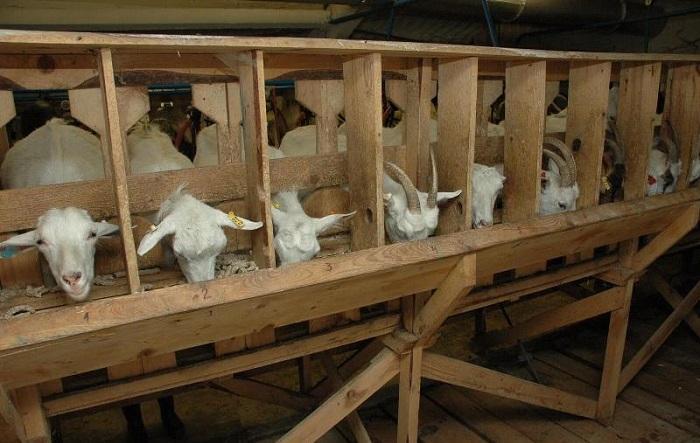 стойло для коз
