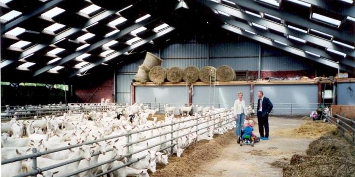 козлиная ферма