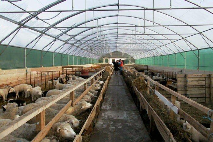жилище для овец