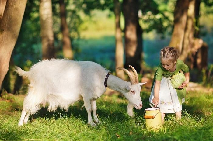 ребенок и коза