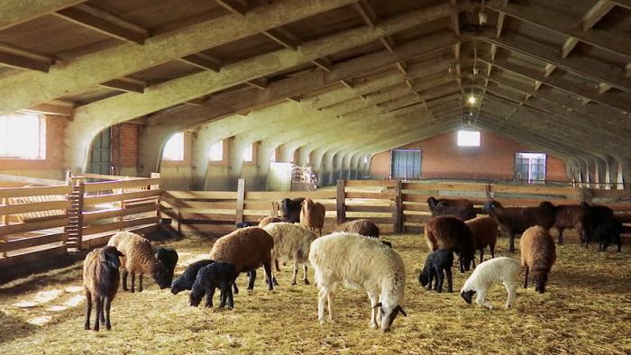 овчарня крытая