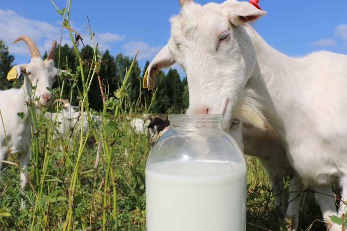 банка молока