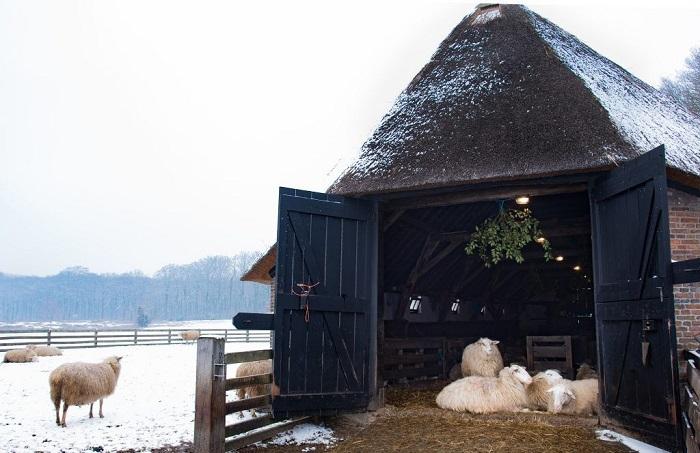зимняя овчарня