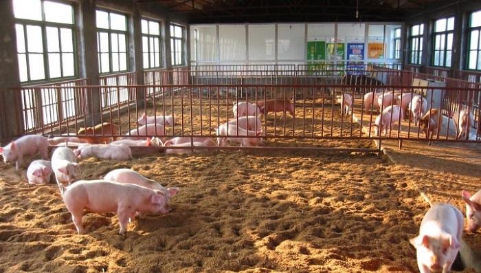 подстилка для свиней