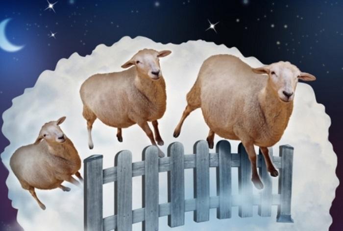 бараны через забор