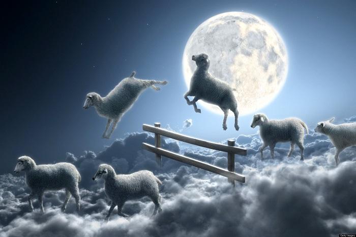 сон из баранов