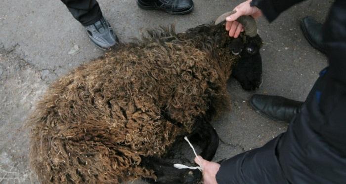 забой черного барана