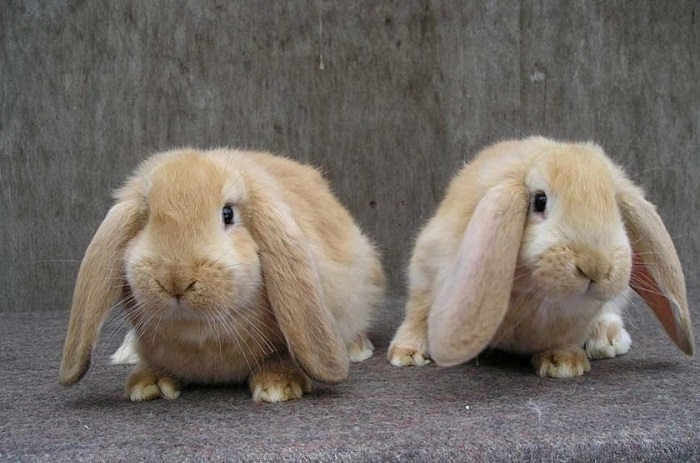 два кролика барана