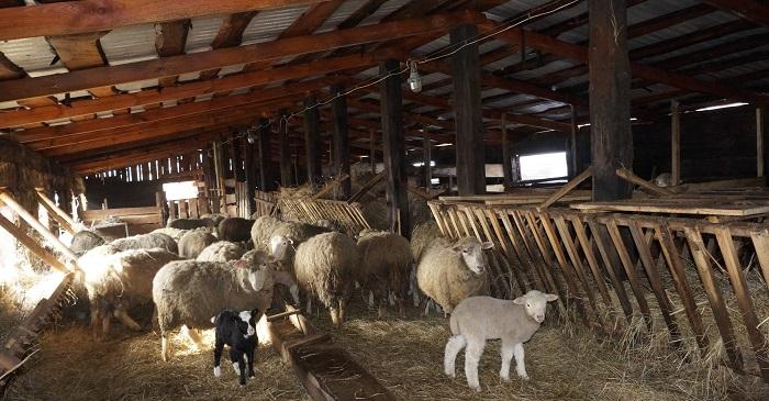 зимний дом для овец