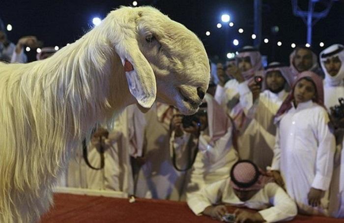 белая необычная коза