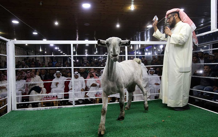 коза в ринге
