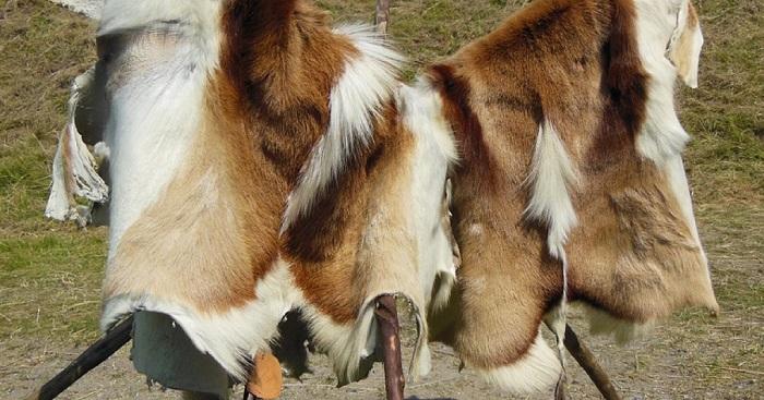 Сушка шкуры козы.