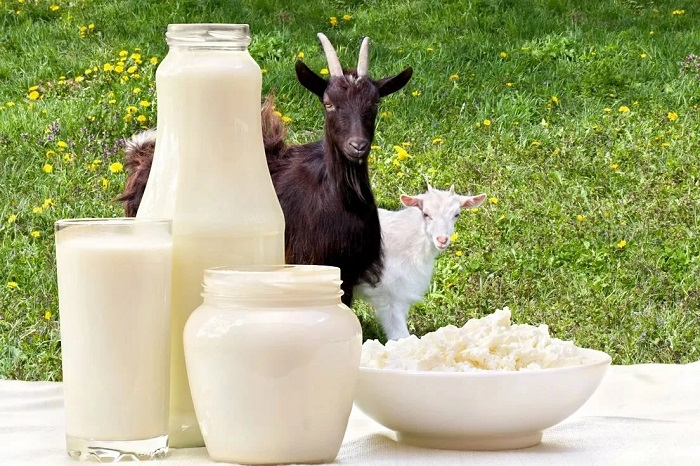 коза, козленок и молоко