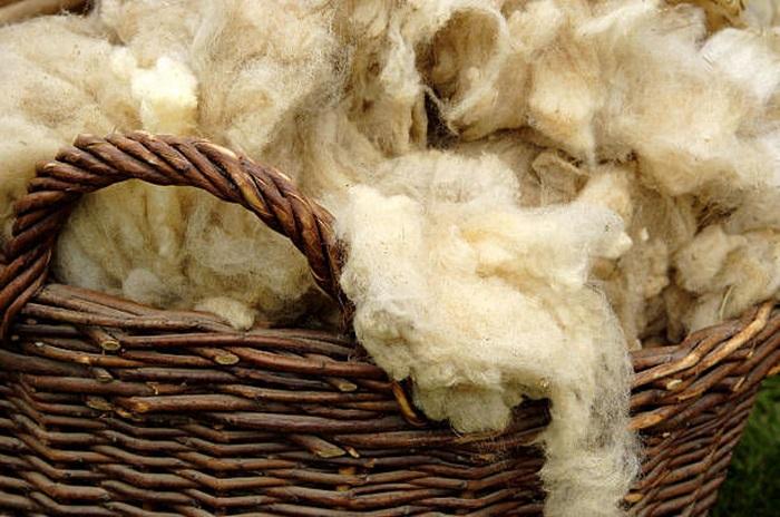 шерсть овцы