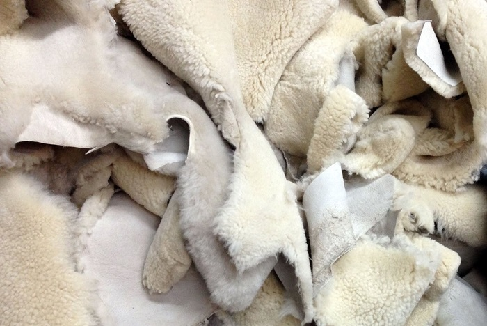 много шкур овечьих