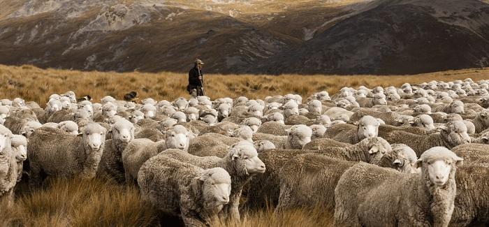 пастбище и пастух