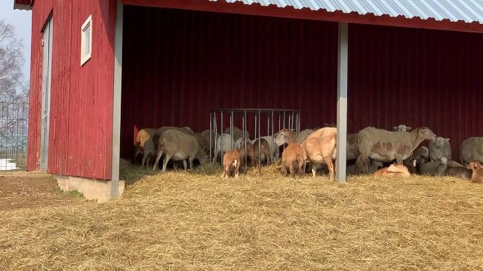 ферма катумы