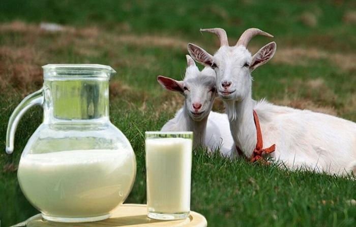 козье молоко в кувшине