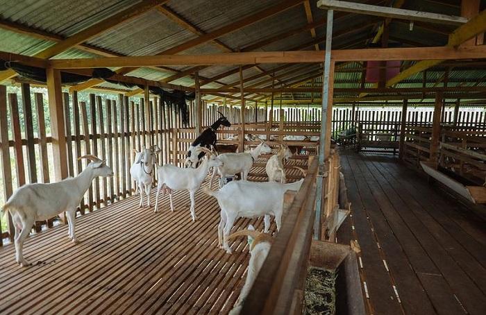 деревянный козлятник