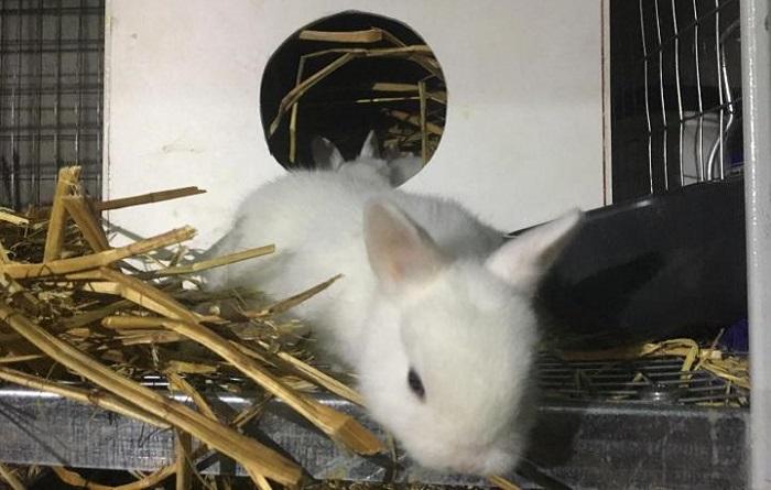 жилище белого кролика