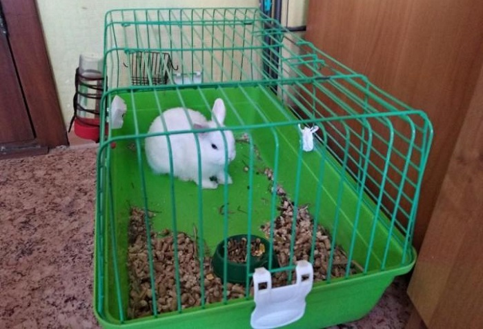 клетка белого кролика